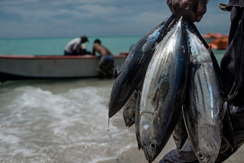 A fisherman holds a batch of tuna in Kiribati, where fishing is one of the most common occupations, on Sept. 25, 2015.