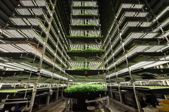 AeroFarms' vertical grow towers