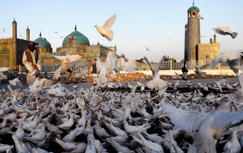 An Afghan man belonging to the Uzbek ethnic group feeds pigeons in front of the shrine of Hazrat-i-Ali, in Mazar-i-Sharif the capital of the northern Afghan Balkh province on June 2, 2007.