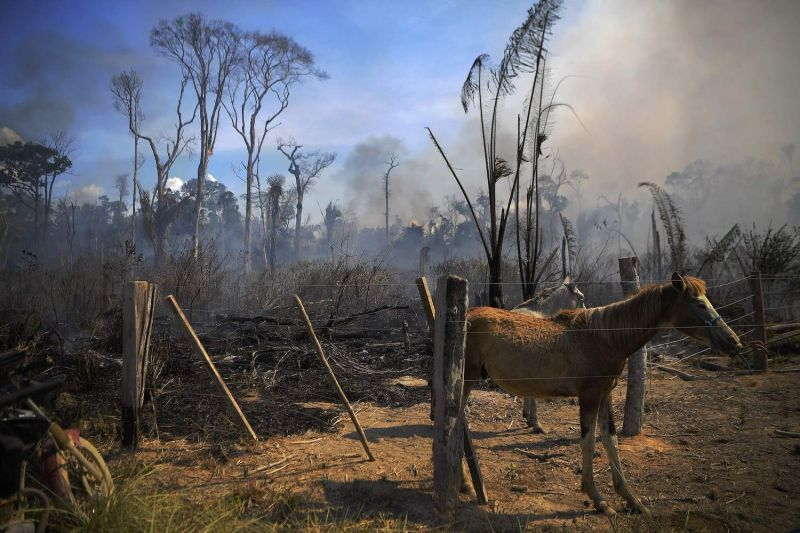 A donkey stands tied up next to a burnt area of Amazon rainforest reserve, south of Novo Progresso in Para state, on August 16, 2020.