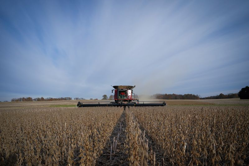 Soybeans are harvested