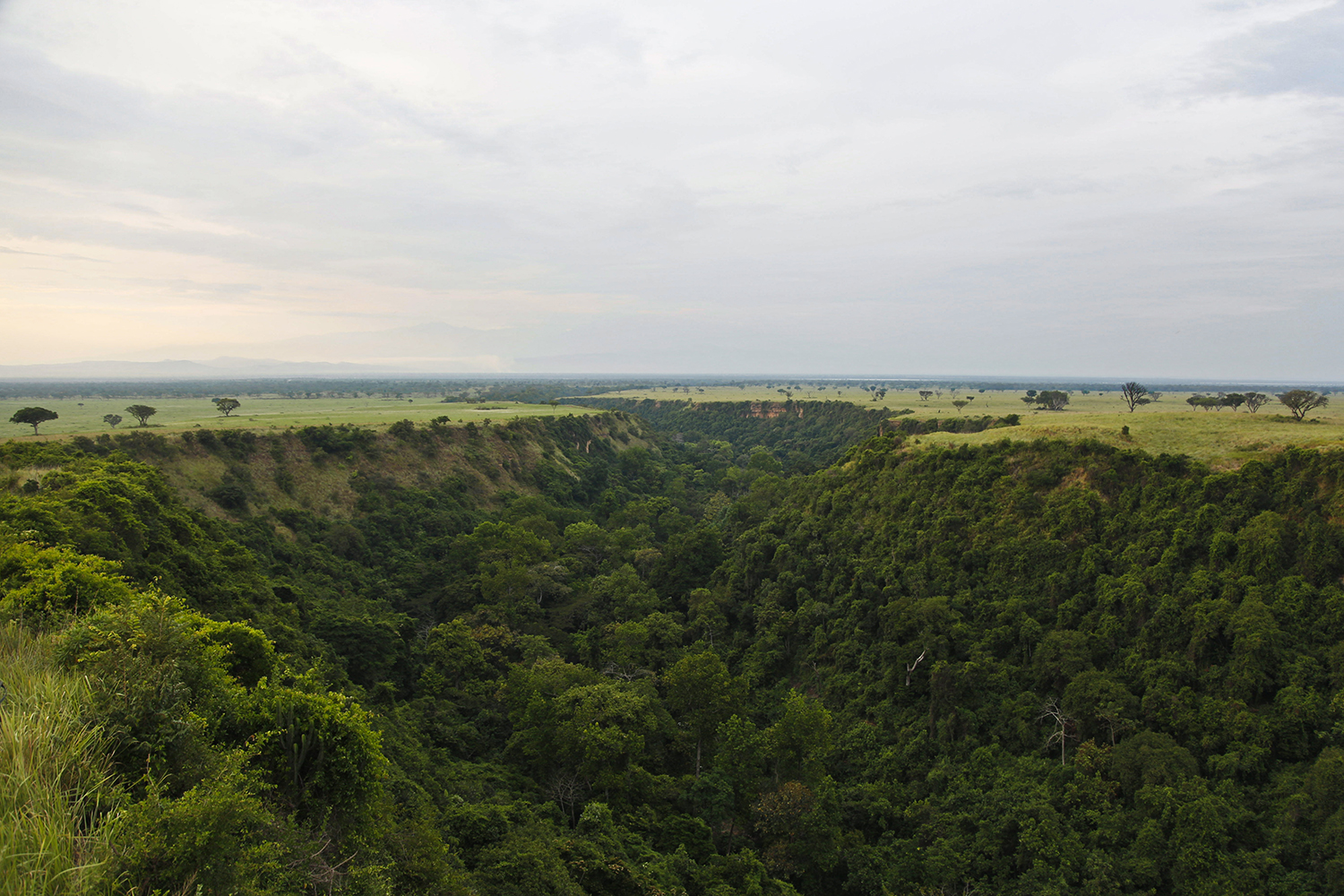 Kyambura Gorge in Queen Elizabeth National Park, seen on Feb. 4, 2020, is home to an array of primate species, including chimpanzees, baboons, vervet monkeys, and the black-and-white colobus.