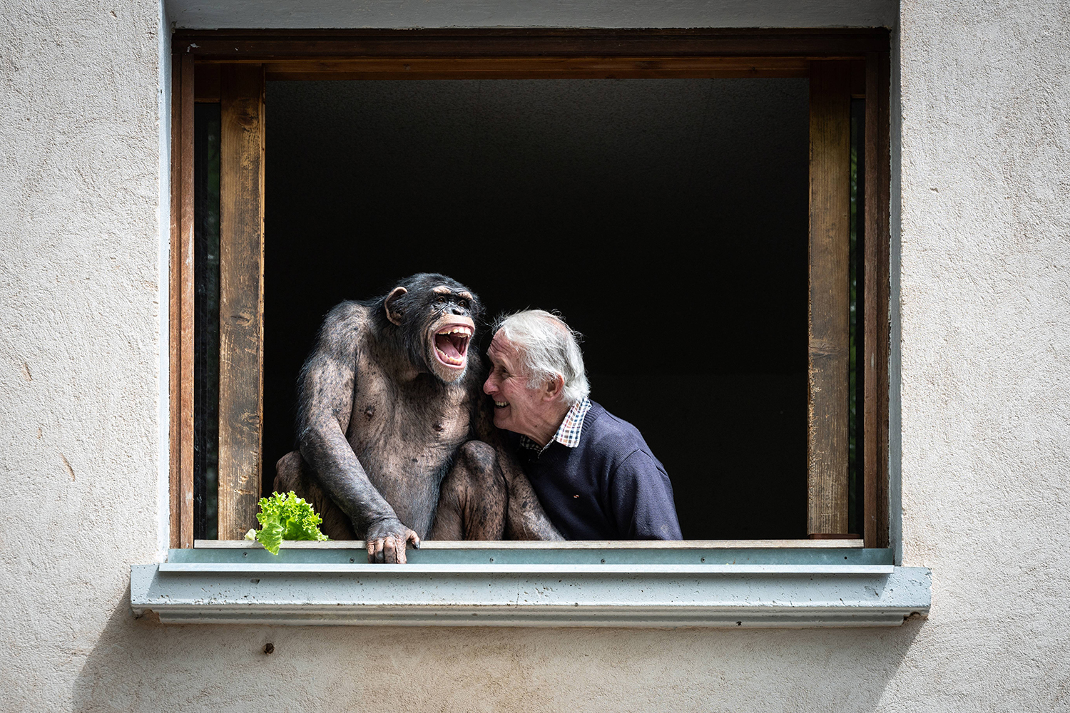 Zoo owner with chimp in France