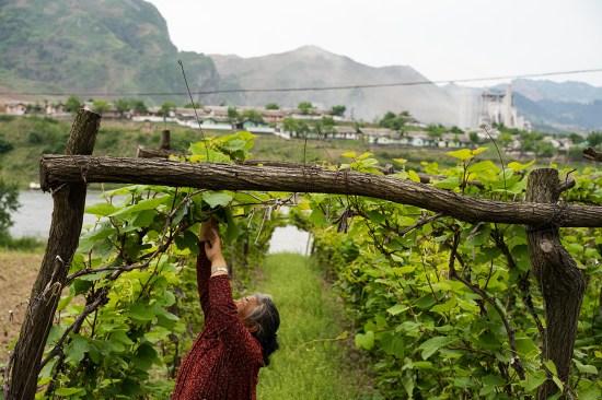 中国吉安的农场