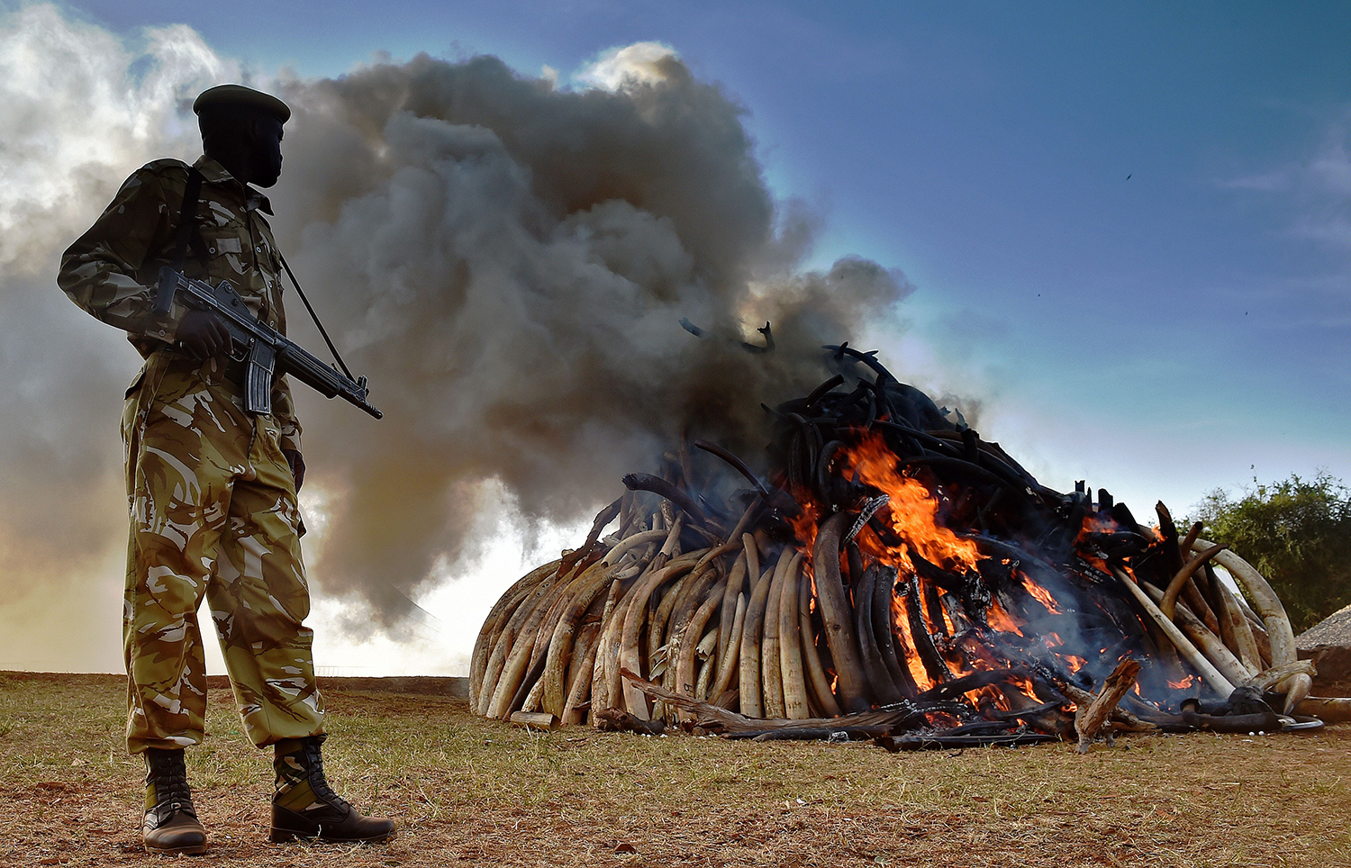 A Kenya Wildlife Services officer stands near a burning pile of elephant ivory seized in Kenya at Nairobi National Park on March 3, 2015.