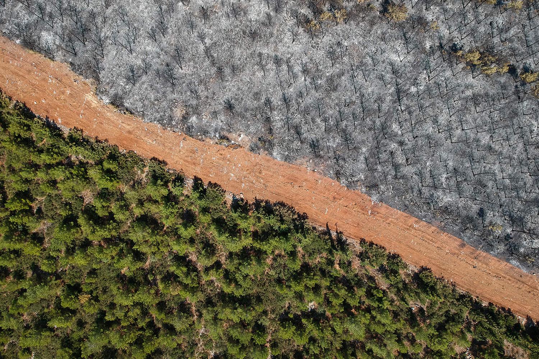 Charred trees in Turkey