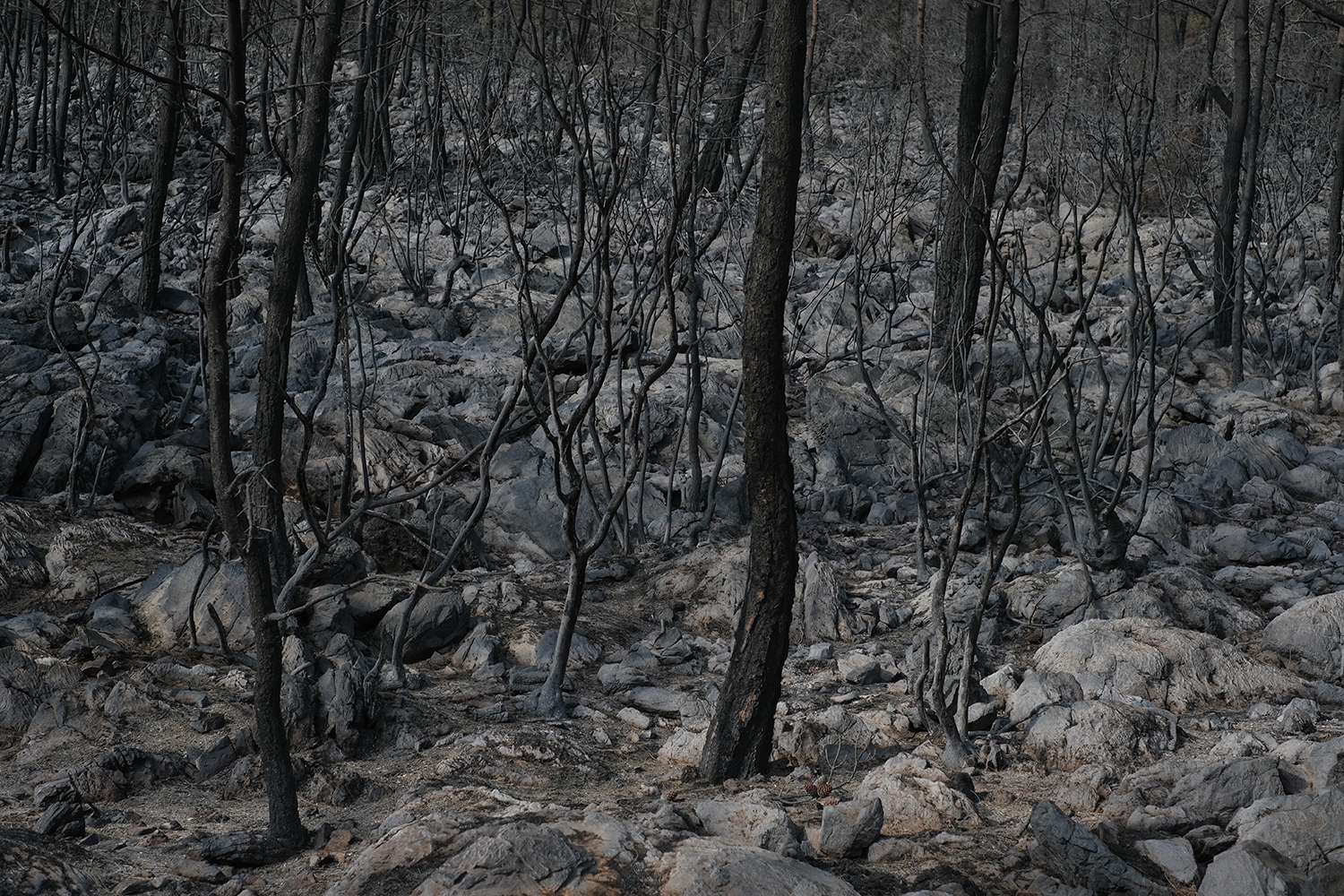 A forest destroyed by fire in Turkey